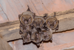 Did you know bats are protected?