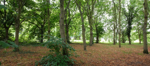 Do you need help managing your woodland?