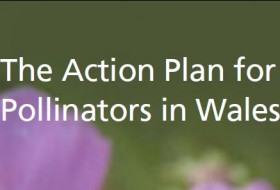 Wales Action Plan for Pollinators