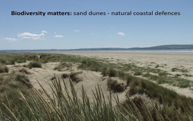 Biodiversity matters: sand dunes - natural coastal defences