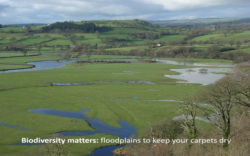Biodiversity matters: floodplains to keep your carpets dry