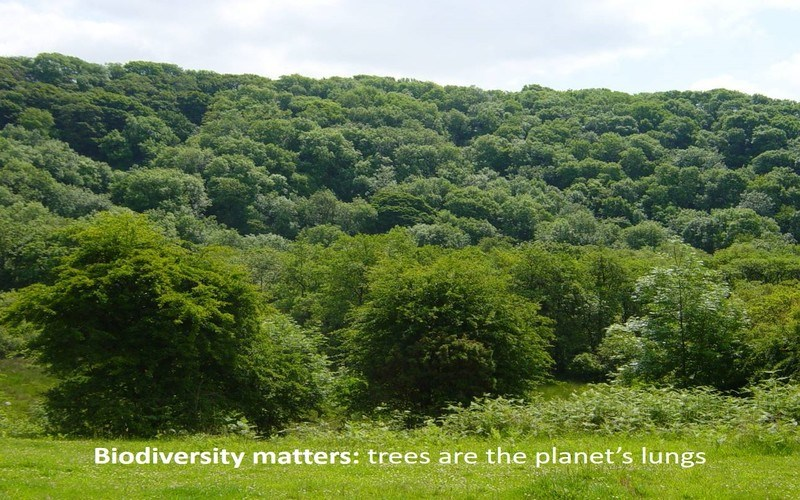 Biodiversity matters: trees are the planet's lungs