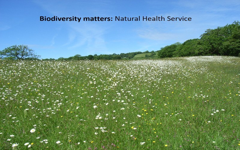 Biodiversity matters: Natural Health Service