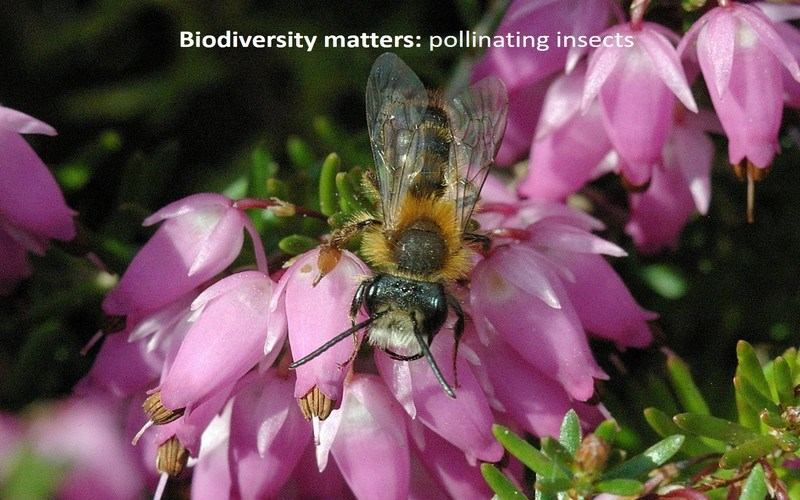 Biodiversity matters: pollinating insects