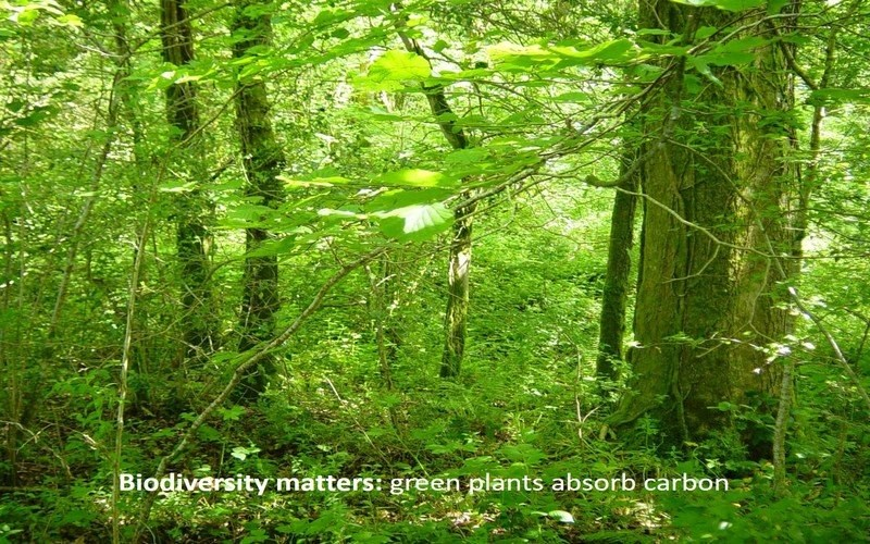 Biodiversity matters: green plants soak up carbon