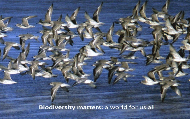 Biodiversity matters: a world for us all